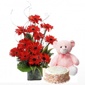 12 Red Gerberas in Small Vase With Cake And Teddy Bear