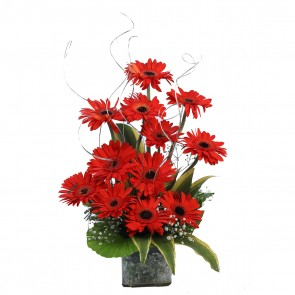 12 Red Gerberas in Small Vase