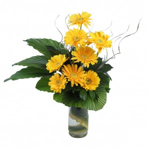 8 Yellow Gerberas in Medium Vase