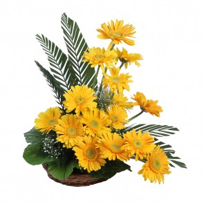 15 Yellow Gerbera in Basket