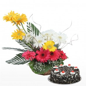 12 Mix Color Gerbera in Basket with Cake