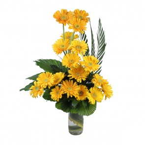 18 Yellow Gerberas in Medium Vase